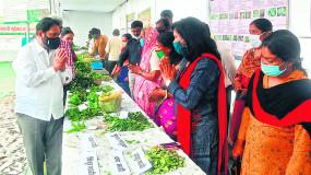 जंगली सब्जी महोत्सव में प्रतिरोधक शक्ति बढ़ाने वाली सब्जियों की मिली पहचान