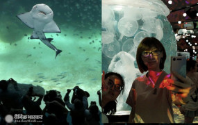 Tourism: कोरोना आउटब्रेक के बीच टाइवान में खुला नया एक्वेरियम, लोगों को पसंद आ रहा पेंगुइन के साथ लंच
