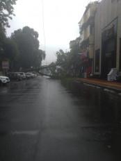 सत्र की पहली अच्छी बरसात से बाढ़ जैसे नजारे, पेड़ गिरे, मकान गिरे