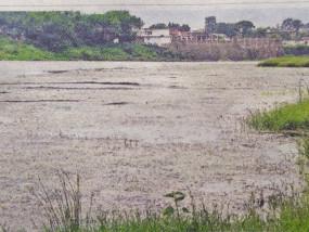 डेयरियों की गंदगी से गोबर की नदी बन चुकी परियट हिरण होते हुए माँ नर्मदा का आँचल भी हो रहा प्रदूषित