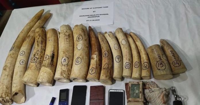 ओडिशा में 14 हाथी दांत बरामद, तीन गिरफ्तार