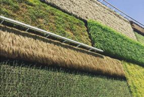 अजब-गजब: दुनिया का अनोखा देश जहां दीवारों पर होती है खेती, उगाई जाती हैं सब्जियां