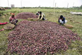 प्याज के निर्यात पर लगी रोक, कीमतों में नरमी की उम्मीद