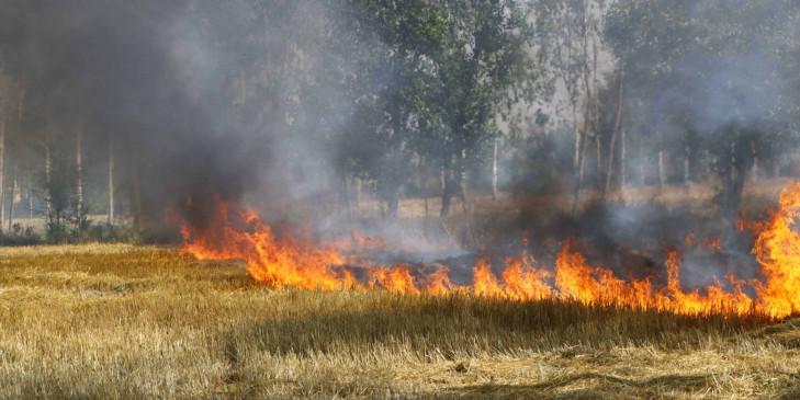 सरकार की सख्ती के बावजूद किसान क्यों जलाते हैं पराली?