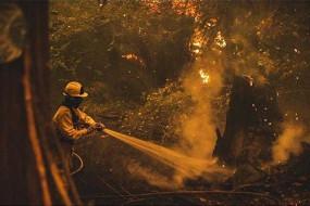 ओरेगन के जंगलों में लगी आग ने 7 की जान ली