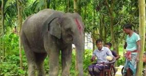पति ने जमीन बेचकर पत्नी के लिए हाथी खरीदा
