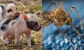 Virus: भारत को ICMR की चेतावनी, भारत में कोहराम मचा सकता है एक और चाइनीज वायरस