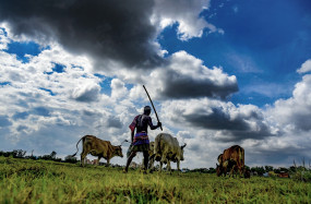 महाराष्ट्र ने नए कृषि कानूनों को लागू करने के आदेश पर लगाई रोक