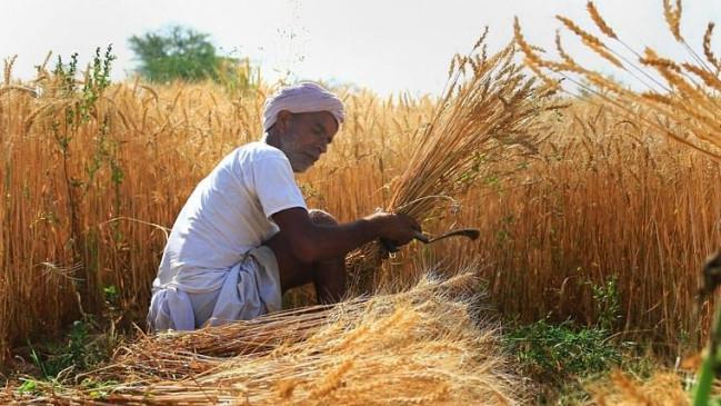 केंद्र की सौगात: कृषि बिल के विरोध के बीच सरकार ने बढ़ाई MSP, गेहूं, चना, सरसों समेत 6 रबी फसलों पर मिलेगा ज्यादा दाम