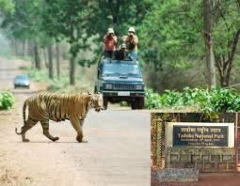 1 अक्टूबर से पर्यटकों के लिए खुलेगा ताड़ोबा, ऑनलाइन बुकिंग शुरू