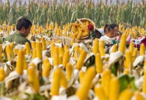 वैश्विक खाद्य सुरक्षा में चीन की भूमिका बहुत अहम
