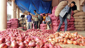 निर्णय: मोदी सरकार ने प्याज के बीज के निर्यात पर तत्काल प्रभाव से लगाई रोक