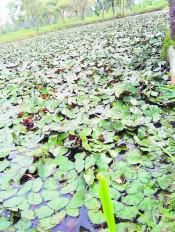 किसानों ने ढूंढी नई राह, धान के खेतों में कर रहे सिंघाड़े का उत्पादन