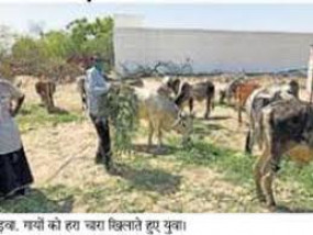 बाढ़ से फसल के साथ पशुओं का चारा भी हुआ बर्बाद, मौदा के 7 के हालात बुरे