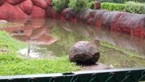 भारी बारिश के बाद जलभराव के चलते हैदराबाद का चिड़ियाघर बंद