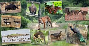 एक नवंबर से पर्यटकों के लिए शुरु होगा नागझिरा-नवेगांव अभयारण्य