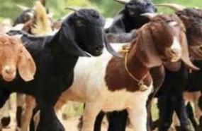 कामठी के धार्मिक स्थल पर बकरों की बलि से हंगामा