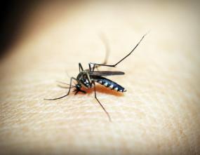 लाओस में डेंगू के मामले 7928 हुए