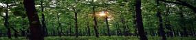 कांग्रेसी नेताओं के साथ बॉलीवुड कलाकार भी गोवा में प्रस्तावित वनों की कटाई के खिलाफ