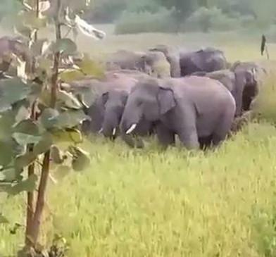 मंगेली के जंगलों में हाथियों ने डाला डेरा, रात में फिर आए सड़क किनारे