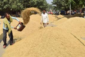 पंजाब में 200 लाख टन के करीब हो चुकी धान की सरकारी खरीद
