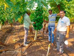 कोरोना की पूर्णबंदी के दौरान पपीता की खेती कर किसान बना लखपति