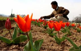 जम्मू-कश्मीर में कोविड संकट से निपटने को लेकर श्रमिकों के लिए नई योजना