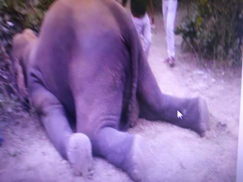 भटककर बरगी के जंगल पहुंचे दो में से एक हाँथी की मौत , दूसरे का पता नहीं चल रहा