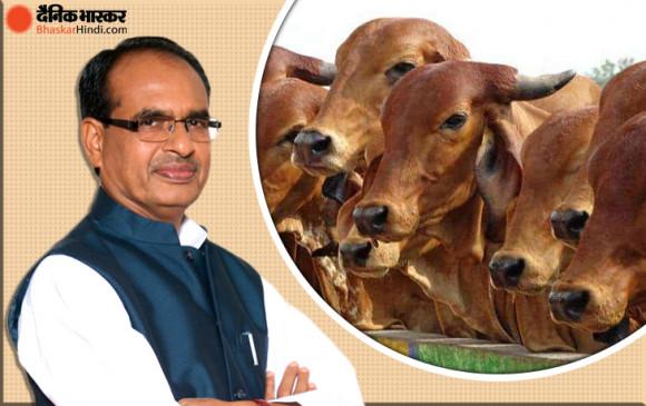 मध्य प्रदेश: शिवराज सरकार बनाएगी गौ कैबिनेट, ये पांच विभाग होंगे शामिल