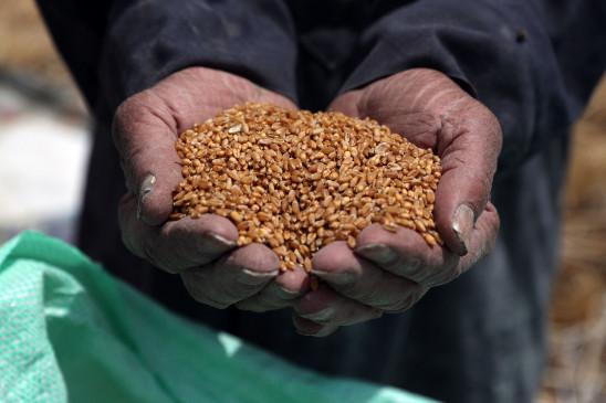 गेहूं समेत तमाम रबी फसलों की बुआई तेज, बारिश से होगा फायदा