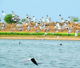 5 नवंबर से होगी विलुप्त होती पक्षियों की प्रजाति की गणना