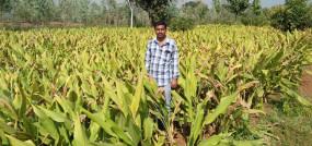 जिले में बढ़ेगा हल्दी का रकवा, प्रोसेसिंग भी होगी - 1300 किसान करते हैं खेती