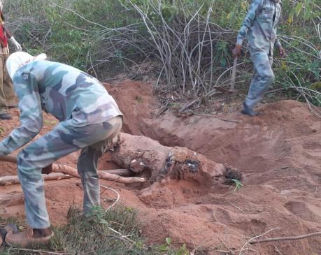 शहडोल-उमरिया की वन सीमा पर मिला बाघ का शव
