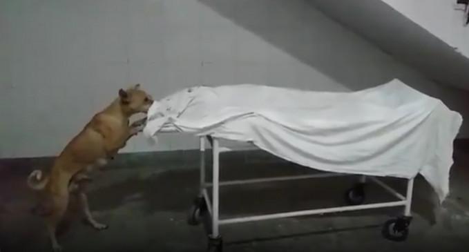 उप्र : बच्ची के शव को कुत्ते द्वारा नोंचने का वीडियो हुआ वायरल