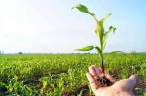 खेती के लिए अब मिलेंगे 63 की बजाय 99 पुरस्कार, युवा किसान व कृषि अनुसंधान के लिए भी मिलेगा अवार्ड