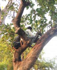 पेड़ों पर चढ़कर घंटों बैठने के बाद हो पाती है अपनों से बात