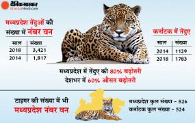 टाइगर स्टेट MP: अब भारत में सबसे ज़्यादा तेंदुए भी मध्यप्रदेश में, कर्नाटक और महाराष्ट्र को पीछे छोड़ बने सिरमौर