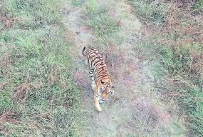 नागपुर : गोरेवाड़ा टाइगर सफारी को मिला 'राजकुमार'
