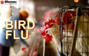 7 राज्यों में पहुंचा बर्ड फ्लू: UP में भी संक्रमण की पुष्टि, दिल्ली गाजीपुर पोल्ट्री मार्केट 10 दिन के लिए बंद, देश में 1200 और पक्षी मरे