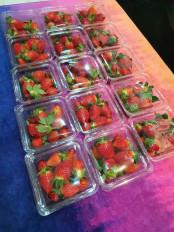 कैलीफोर्निया की स्ट्राबेरी अब छिंदवाड़ा जिले में भी उगाई जा रही