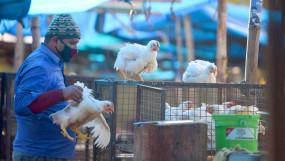 Avian Influenza: इंसानों के लिए कितना खतरनाक है बर्ड फ्लू, जानिए इससे जुड़े हर सवाल का जवाब?