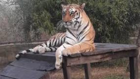 बालासाहब ठाकरे अंतरराष्ट्रीय प्राणी उद्यान बना गोरेवाडा का प्राणी संग्रहालय