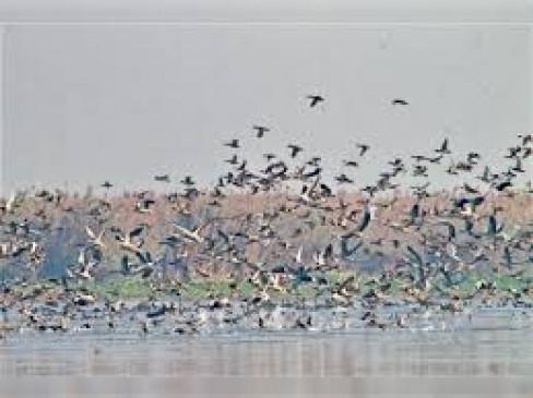 सैकड़ों पक्षियों की मौत: सर्वेक्षण शुरू, खरीद-फरोख्त सहित आवागमन पर रोक