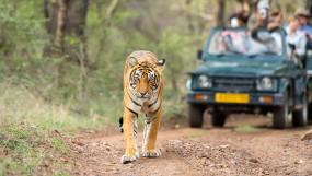 जंगल सफारी, एक जिप्सी में 6 पर्यटक ही रहेंगे, 26 के पहले फैसला संभव