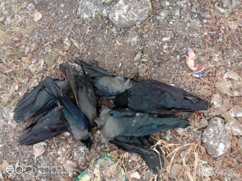 महाराष्ट्र : बीड जिले में बर्ड फ्लू का प्रकोप , भोपाल प्रयोगशाला में हुई जांच