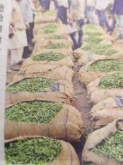 एक जिला-एक उत्पाद योजना, मटर उत्पादक किसानों को होगा अधिक मुनाफा - जबलपुर के मटर कीहो सकेगी ग्लोबल ब्रांडिंग