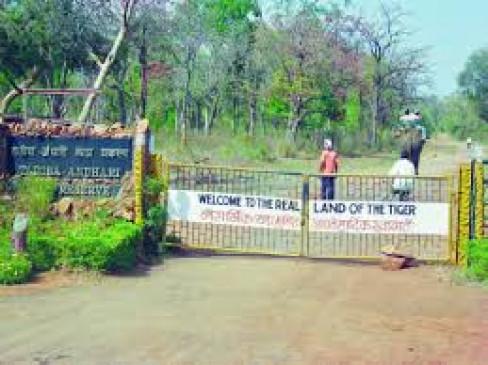 मुंबई में कटे पेड़ों के बदले लगाए जाएंगे पौधे, बीएमसी ने ताडोबा में खरीदी 19.50 हेक्टेयर जगह