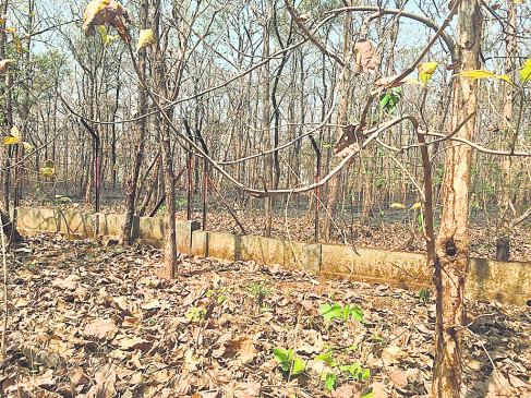 नागपुर के सेमिनरी हिल्स में आग से 4 हेक्टेयर जंगल खाक