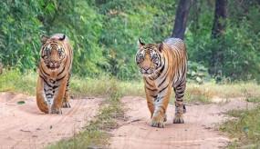 दुनिया के टॉप 25 नेशनल पार्कों में प्रदेश का बांधवगढ़ शामिल