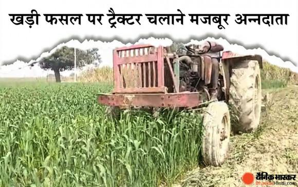 Farmers Protest Day 87: खड़ी फसलों पर ट्रैक्टर चला रहा अन्नदाता, बढ़ सकता है गेहूं का संकट